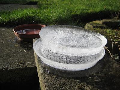 Frozen Bird Water 2021Jan25-3rings