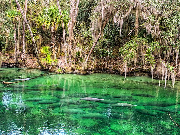 10 Florida Springs for Nature Lovers