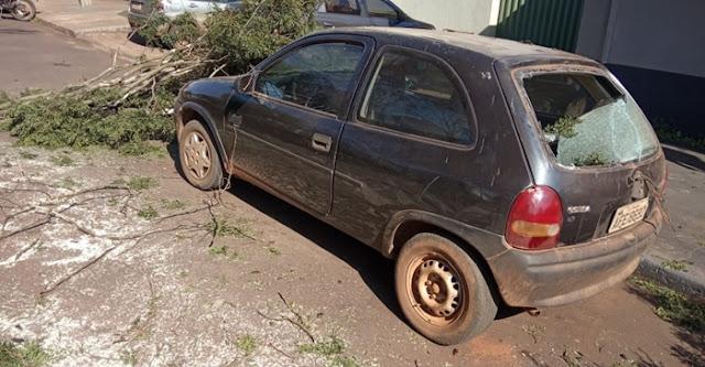 Roncador: Queda de árvore causa danos em veículo na Rua Rio de Janeiro