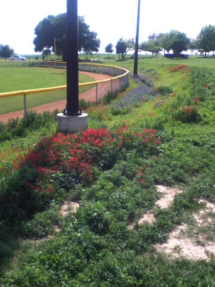 UNT Dallas Library : Native Plant Database