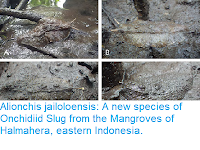 http://sciencythoughts.blogspot.com/2018/09/alionchis-jailoloensis-new-species-of.html