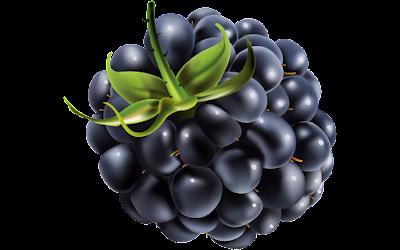 clipart gratis gambar buah blackberry