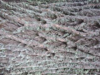 Tree Bark (used as water)
