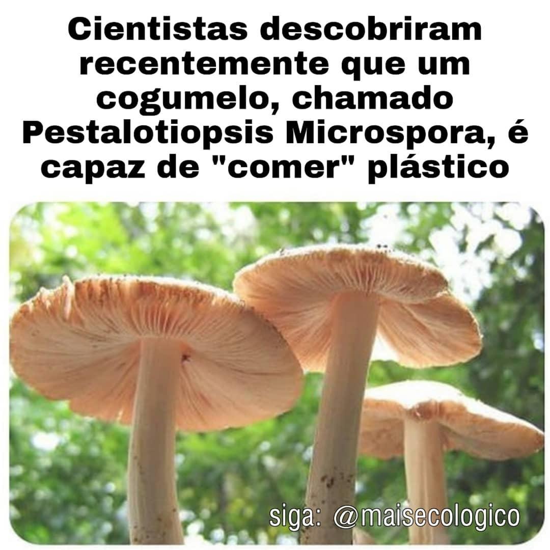 cogumelo capaz de comer plástico