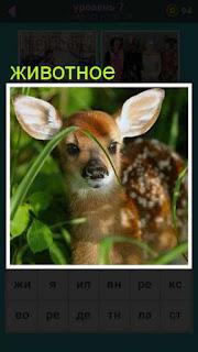 в траве сидит маленькое животное олененок 667 слов 7 уровень