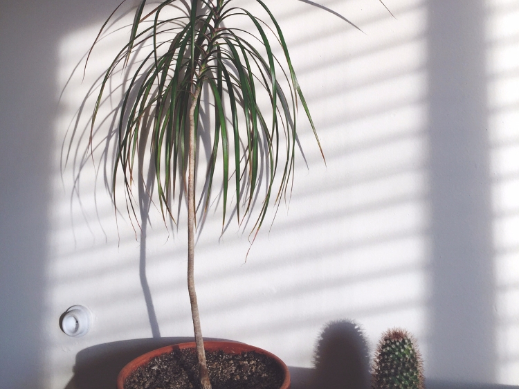 Indoor palm tree and cactus basking in the long rays of winter sunshine // Zone 6 & 7 Garden Tasks for February // www.thejoyblog.net