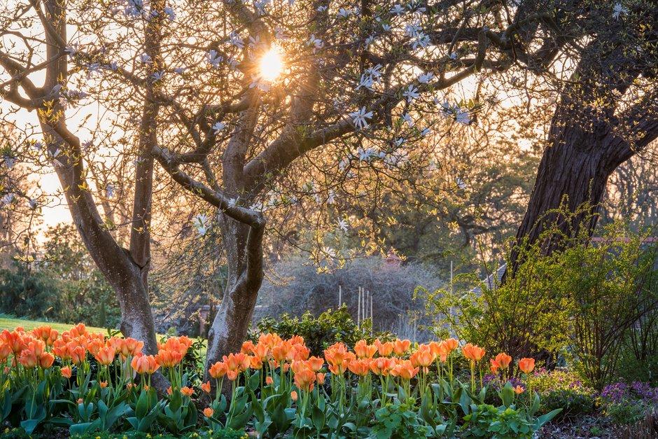 Jardines y parques cerrados y festivales de flores, plantas y jardín cancelados