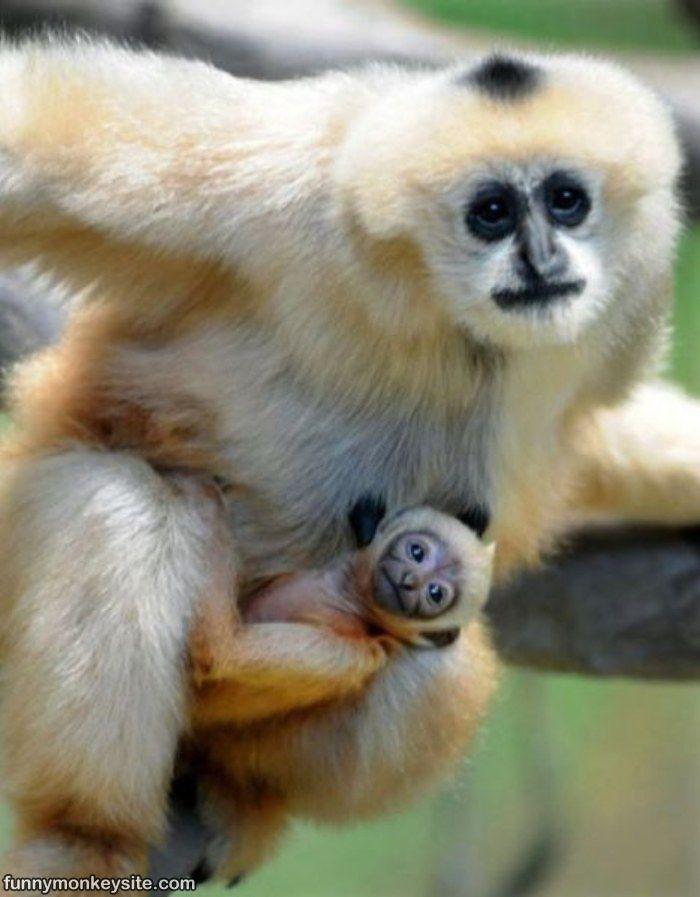 hilarious monkeys - photo #36