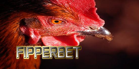 aduan ayam