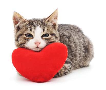 Kitten curling up with heart cushion