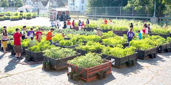 Cuidado de plantas revista de cuidado de jardines y plantas - Cuidado de jardines ...