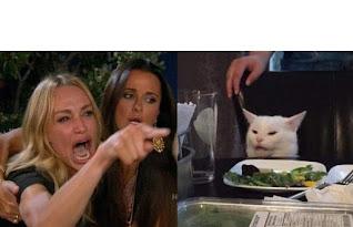 Cat And Girl Meme Template
