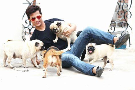 Mr  Dog Online Pet Shop