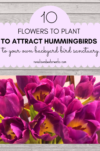 how to get hummingbirds and butterflies in your backyard