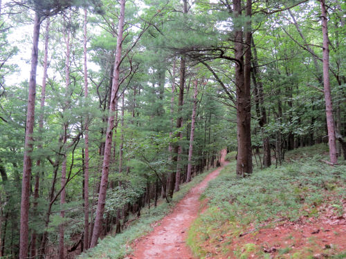 trail in Nordhouse Dunes