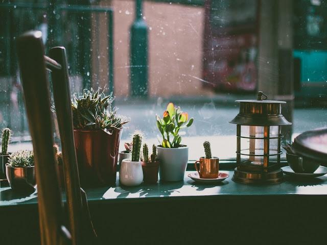 Plantas para el alféizar de una ventana