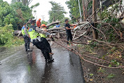 Satu Cafe di Kota Bitung Rusak Ditimpa Pohon Tumbang