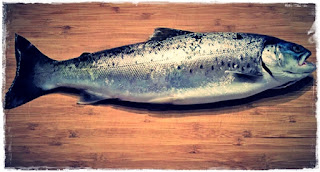 Ciri Ikan Segar dan Busuk