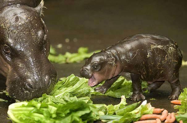 lindos%2Banimais%2Bbebe%2B%2B%25285%2529 - Os filhotes de animais mais lindinhos que você já viu!