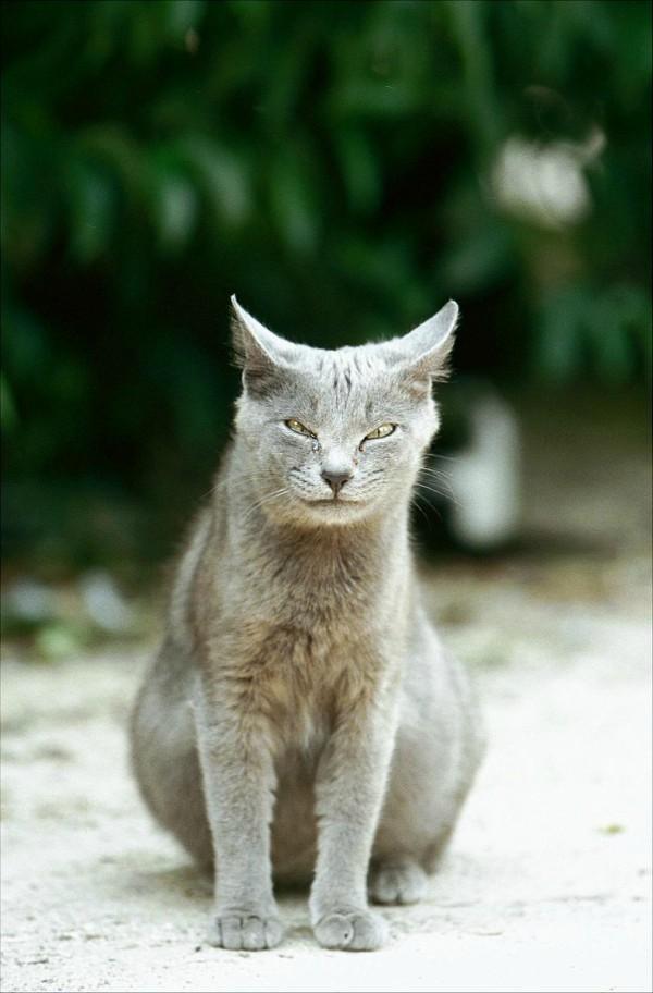 madrid retiro cats