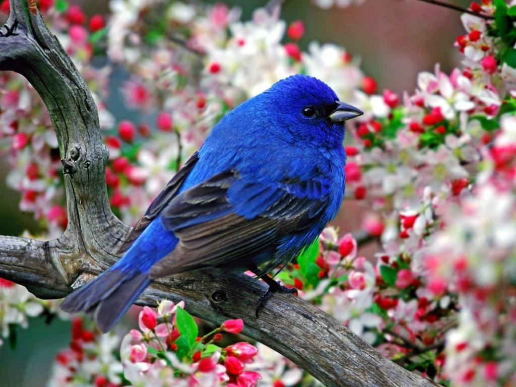 SUN SHINES: Beautiful-Blue-Bird-Wallpaper