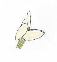 golden banner flower, side view, no bumblebee