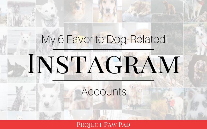 Six of my favorite dog instagram accounts   Project Paw Pad   #dogsofinstagram #dogslife #dogmom #prouddogmom #bestwoof