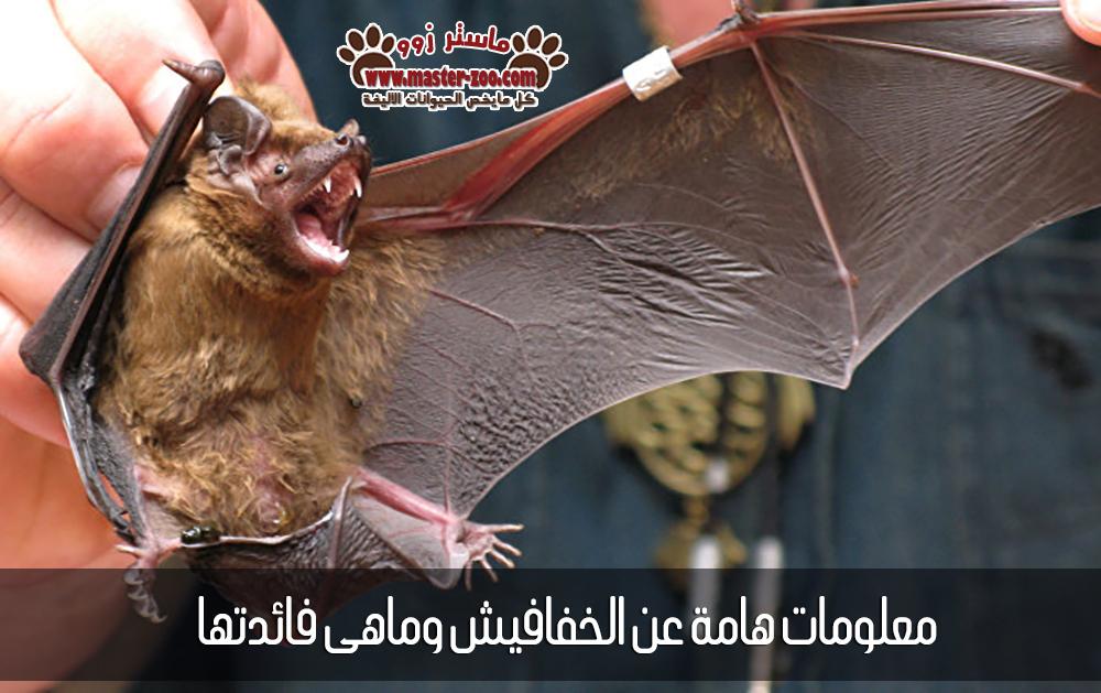 معلومات هامة عن الخفافيش وماهى فائدتها - Bats ؟