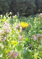 live focus flower