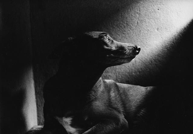 Cachorro iluminado - Iluminação