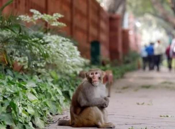 इस शख्स को बंदर ने सिखाया अच्छा सबक, वीडियो देख नहीं रुकेगीं आपकी हंसी