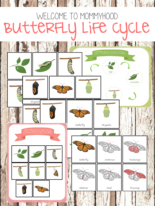Montessori activities: Butterfly life cycle printables for kids by Welcome to Mommyhood #springactivities, #preschoolactivities, #montessori, #montessoriactivities, #kindergartenactivities, #elementary