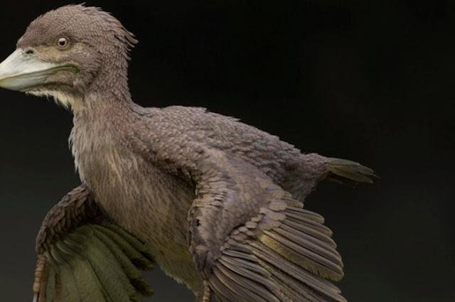 Satu Kampung Geger setelah Ilmuan Jepang Berhasil Menemukan Fosil Burung Zaman Dinosaurus yang Punah!