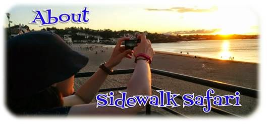 About Sidewalk Safari