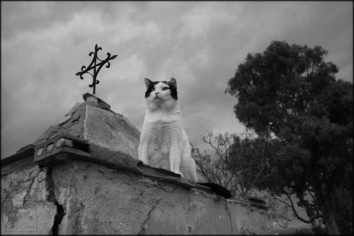 fotografia,gato,cruz,ruina,