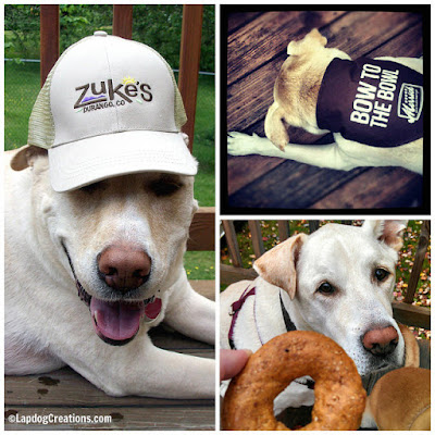 Always a Ham, and Always Ready to Review #dogtreats for the blog - Win some of his favorites in honor of his life! #CelebrateLife #InHonorofZeus #doggiveaway #Chewy #LapdogCreations #dogbirthday ©LapdogCreations