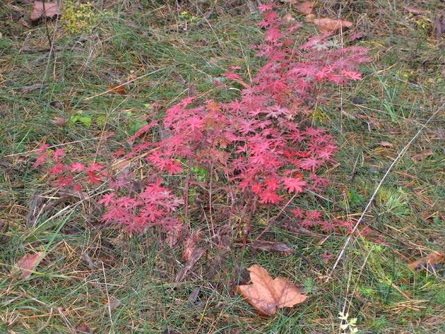 Фото Виталия Бабенко: осенние листья