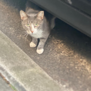 A cat peers out from beneath a car.