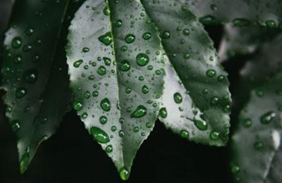 cara mendapatkan air embun dengan mudah kumpulan cara membuat air embun manfaat air embun untuk bayi manfaat air embun untuk paru paru manfaat air embun untuk burung manfaat air embun untuk lambung manfaat air embun untuk jantung manfaat air embun untuk ayam aduan