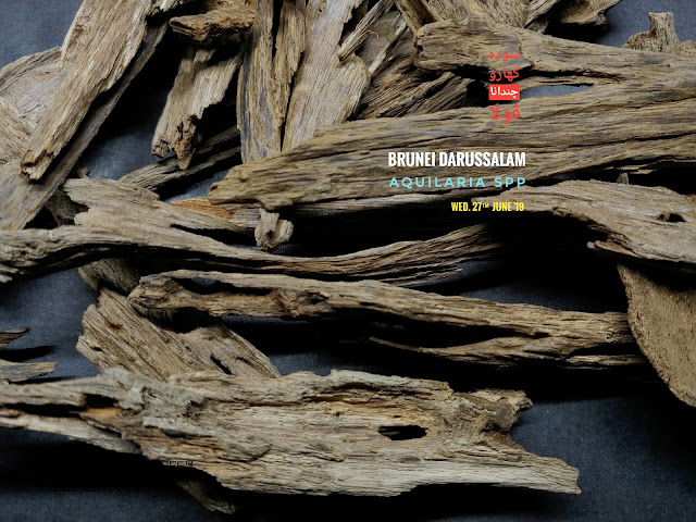 Medium quality of soil grade of Agarwood from Brunei. Perfect for burn as incense. Gentle heating is recommend as to get clear woody aroma.