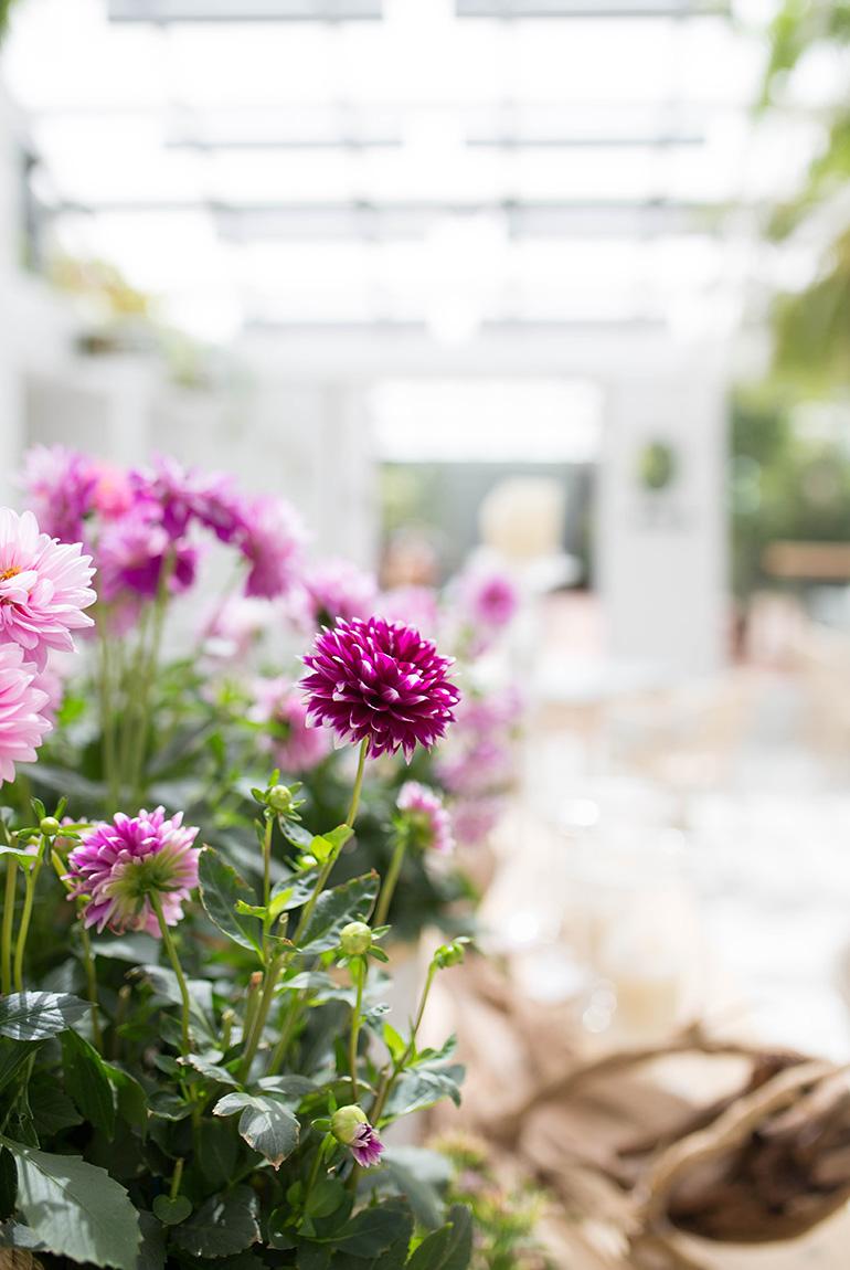 invernadero-peñotes-comedor-flores-decoracion-vivero
