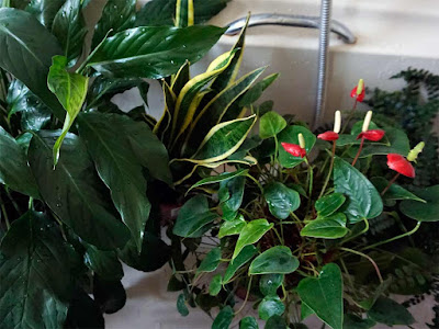 house plants,