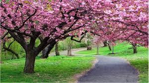 موضوع تعبير عن جمال الطبيعة فى فصل الربيع 2019