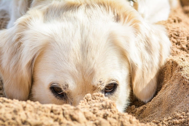 Why Do Dogs Eat Dirt: The Truth Behind this Curious Behavior