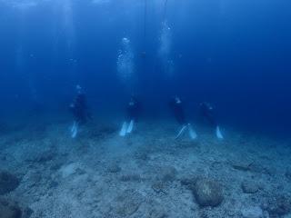 2021年6月19日の柏島ダイビング