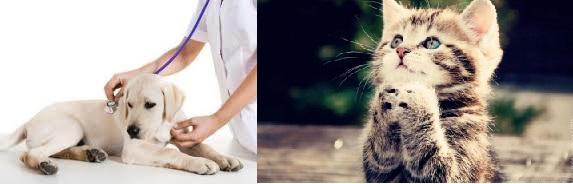 amasya-veteriner-klinik