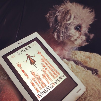 Murchie lays on his sheep-shaped pillow, his ears perked towards something outside the frame to the right. In front of him is a white Kobo with A Gathering of Shadows's cover on its screen. The cover features a minimalist illustration of a masked person in a knee-length red and black coat. They hold a dagger in each hand as they float above the map-filled silhouettes of nine hands outstretched to grab them.