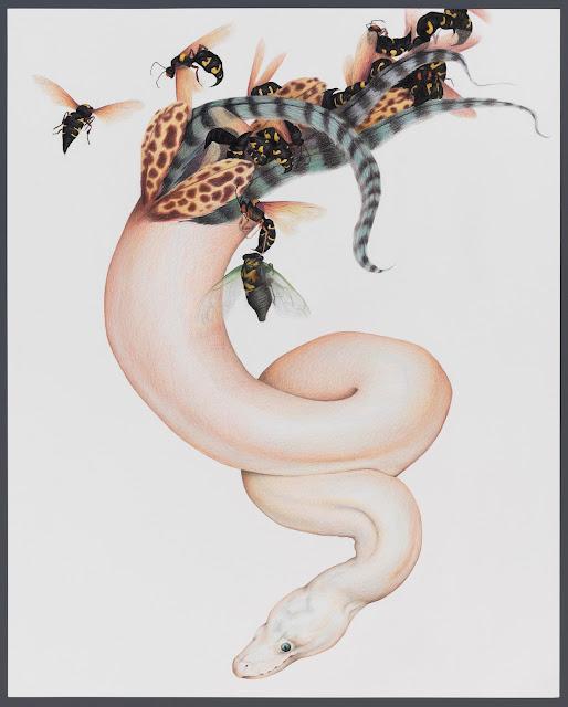 Selvedge  Lauren Levato Coyne  22x18 inches, Pencil on Watercolor Paper, c. 2015