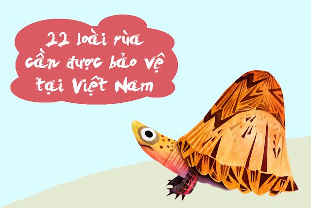22 loài rùa cần được bảo vệ tại Việt Nam