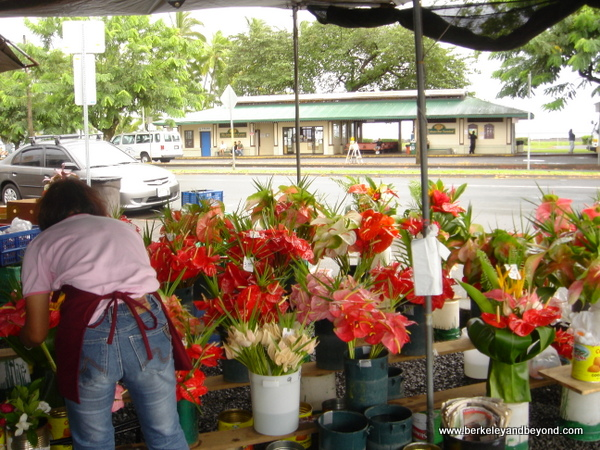 anthuriums at Hilo Farmer's Market in Hilo, Hawaii